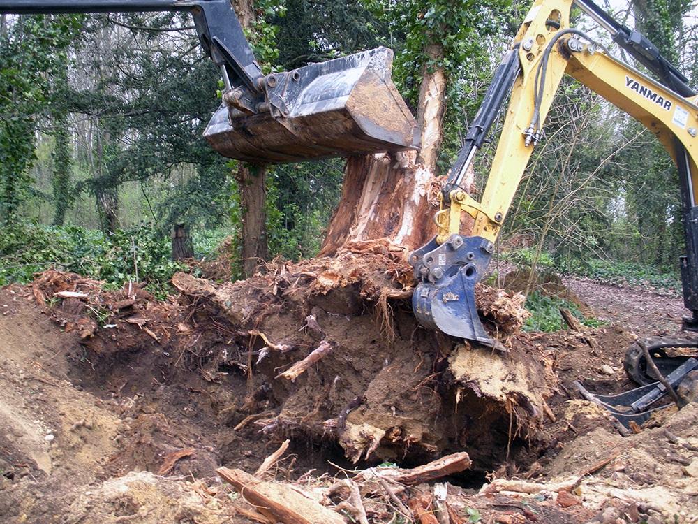 Dessouchage arbre